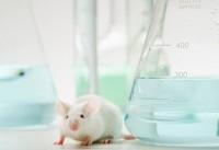 تولد موشهایی که به صورت ژنتیکی فاکتور ۸ آنها غیر فعال است