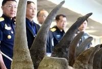 کشف محموله ۴۰ کیلویی شاخ کرگدن در فرودگاه هنگکنگ