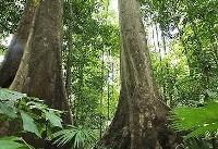 تعدیل اثرات گاز CO۲ با احیای جنگلهای جهان