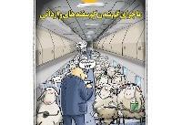سلفی گوسفندها از داخل هواپیما!