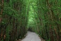 هشدار درباره خطر نابودی جنگل های شمال ایران