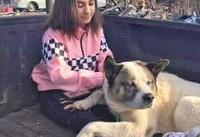 بازگشت سگ گمشده پس از ۱۰۱ روز