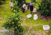 چرا کشاورزی در مازندران صرفه ندارد؟
