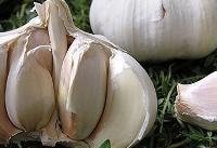 پیشگیری از سرطان روده با برخی سبزیجات
