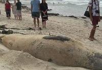 عکس | جانور بزرگ دریایی در سواحل کیپ تاون