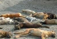 اقدام  خودسرانه یک دهیار برای کشتن ۳۷  قلاده سگ 