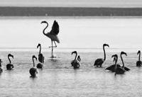 ۲۰۰ هزار پرنده مهاجر در خوزستان سرشماری شد