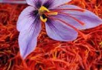 سه اصل مهم در تولید بهترین زعفران جهان