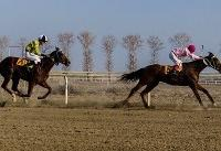 هفته قهرمانی کورس اسبدوانی زمستانه گنبد برگزار شد