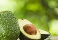 دانستنیهای جالبی درباره میوه اسرارآمیز؛ تجمع چربی خوب در محصول مکزیکی