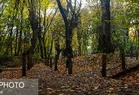 چرا امسال سازمان جنگلها با نیروهای حفاظتی جنگل قرارداد نبست؟