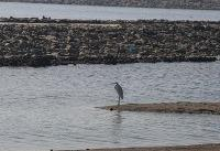 فرماندار: تلاش برای انتقال آب تالاب گمیشان به دریا