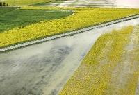 حجتی: سیل بیش از ۵۰۰ میلیارد تومان به کشاورزی مازندران خسارت زد