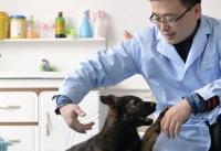 سگ پلیس در چین شبیه سازی شد