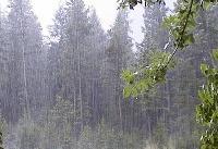 باران شدید برای جنوب و غرب کشور | برف هم میبارد