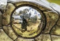 چشم در چشم شدن لنز عکاس و مار سمی! +عکس