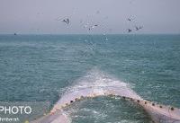 کاهش ذخایر دریایی استان بوشهر