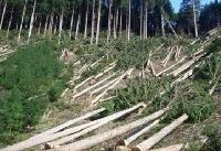 بهادری: معلوم نیست قطع وسیع درختان در آذربایجان توسط کدام مافیا انجام میشود