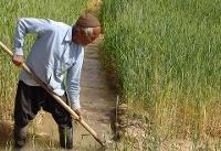 تغییرات اقلیمی مهمترین معضل بخش کشاورزی است