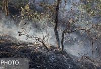 ۱۰ نکته درباره آفات و بیماریها در جنگلهای کشور