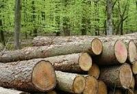 چرا تا ۲۰ سال آینده جنگلی در ایران نخواهیم داشت؟