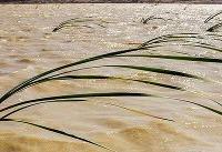ضرورت اجرای برنامههای فناورانه برای حداکثر پایداری و ماندگاری آب در تالاب هامون