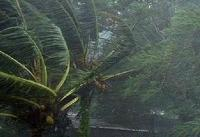 ریشه کن شدن صدها درخت کرمان با وزش شدید باد