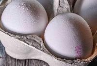 آزاد شدن صادرات تخممرغ پس از ممنوعیت ۳ ماهه