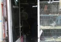 جلوگیری از فعالیت صنف پرنده فروشی در بافت مسکونی منطقه ۱۹