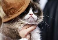 Grumpy Cat, whose scowl launched a million memes, dies age 7