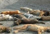 سگ&#۸۲۰۴;ها را نمی&#۸۲۰۴;کشیم خودتان بیایید و ببینید