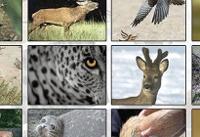 استان مرکزی سومین استان کشور در تنوع زیستی