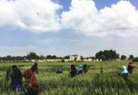 کشتزاران بلخ، پناهگاه زنان آواره