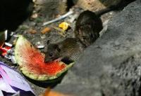 ورود «نانو پودرهای غیرسمی» به میدان مبارزه با موشهای تهران