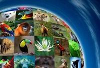 تاکید امسال روز جهانی تنوع زیستی بر غذا و سلامتی انسانها