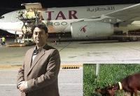 انتقال هوایی ۱۲۰۰ راس بز اسپانیا به استان یزد