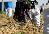 اختصاص ۲۰۰۰ میلیارد تومان تسهیلات اشتغال روستایی در سال جاری