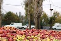 انباشت سیب در کنار جادههای آذربایجان غربی ممنوع شد