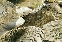 ۴۰ درصد لاکپشتهای دنیا در آستانه انقراض
