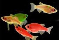 کشف اسرار بیماری&#۸۲۰۴;های ژنتیکی مغز با کمک ماهی زبرا