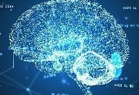 امکان تشخیص آنلاین نورونهای داخل قشر مغز در حیوان زنده در کشور میسر شد