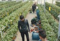 راهاندازی اولین شهرک گلخانهای کرج