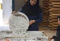 تولید ابریشم در همدان گل میکند