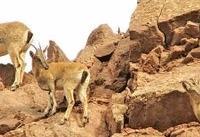 شناسایی ۳۵۸ گونه جانوری در لرستان