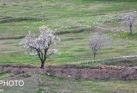 بررسی وضعیت باغات تهران