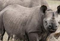 خطر انقراض حیوانات عظیمالجثه در ۱۰۰ سال آینده