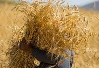 گزارشی از قاچاق گندم به خارج نداشتهایم
