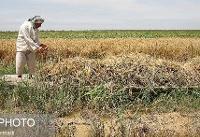 باید به سمت کشاورزی دانش بنیان حرکت کنیم