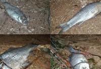 احتمال فروش ماهیهای مسموم در بازار چابهار