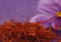 رشد ۹۳ درصدی حجم معاملات آتی زعفران در بورس کالا